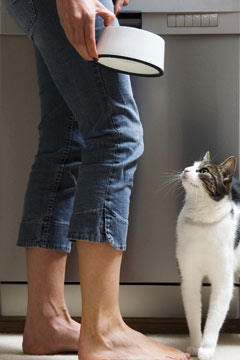 woman feeding cat photo