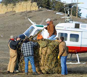 montana hay drop horse picture