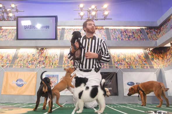 puppy bowl picture