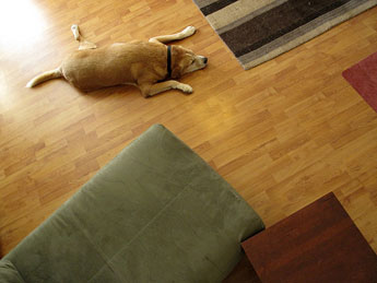 Dog proofing hardwood floors tips from readymade for Hardwood floors and dogs
