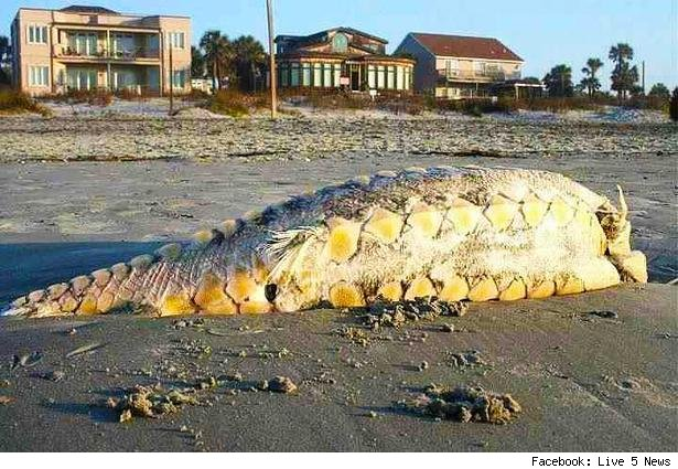 Prehistoric fish washed up on shore - photo#6