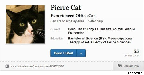 Cats are great at LinkedIn. Humans, not so much.