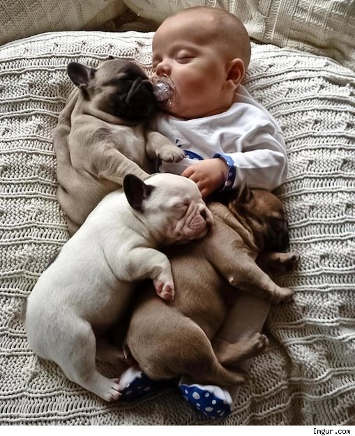 baby and puppies napping