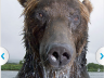 What Is It Like to Be Eaten by a Grizzly Bear? GoPro Camera Knows