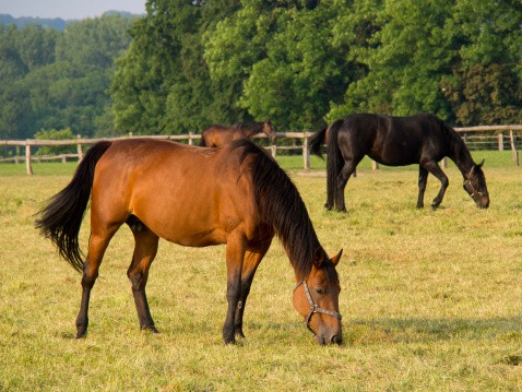 Rabies in Horses on the Rise | Animals-Pets