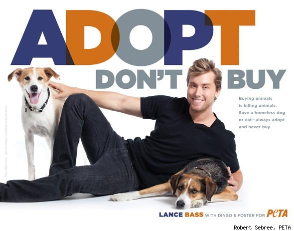 Lance Bass and Poses for PETA With Rescue Dogs