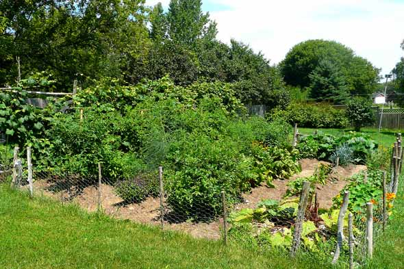 grow vegetable garden