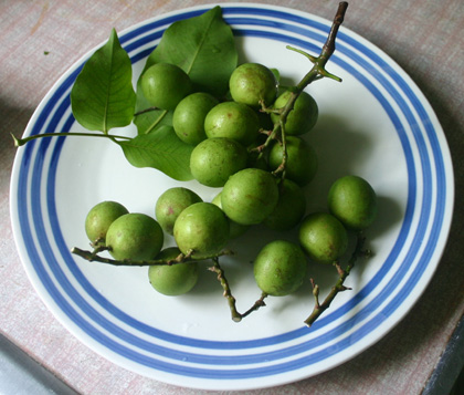 Quenepas In English