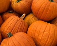 Numerous pumpkins