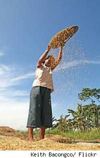 A person dumping grain out of a container.