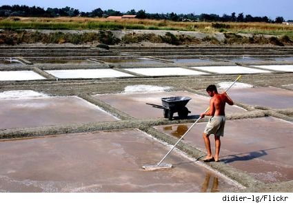Picking the fleur de sel