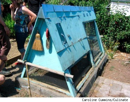 an A-frame chicken coop over a raised bed garden