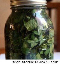 Mason jar of mint