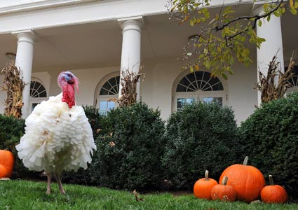 pardoned turkey at the White House