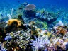 Coral Reefs Decline, Impacting Seafood