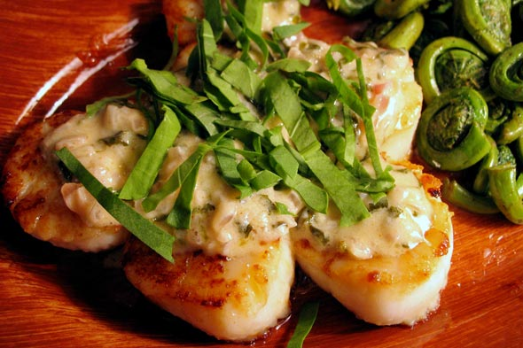 sea scallops with sorrel sauce