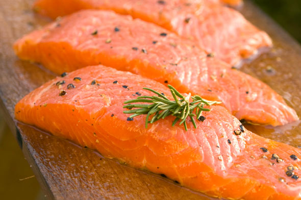 genetically engineered salmon from AquaBounty
