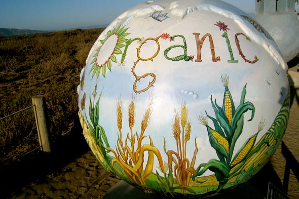 organic food crops