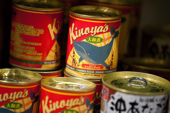 canned whale meat
