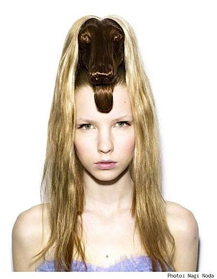 dog hairstyle. Dog-shaped hair