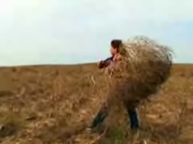 Woman Accidentally Starts Internet Business Selling Tumbleweeds