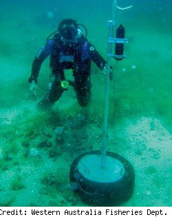 a shark tag sensor on the ocean floor