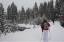 Cross Country Skiing Through Yellowstone