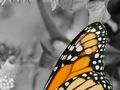 Butterfly with grayscale background