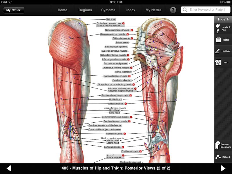 Netter Atlas Of Human Anatomy Ipa