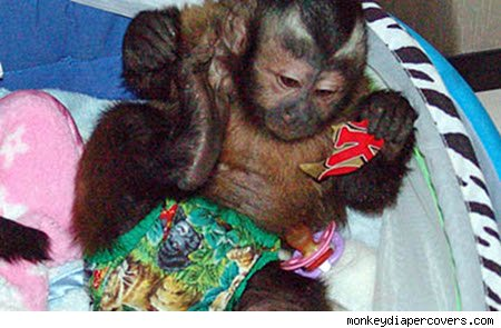 animal diaper monkey