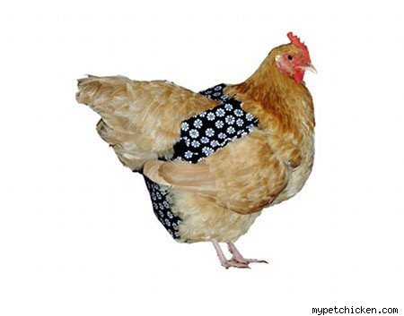 animal diaper chicken
