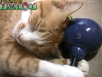 cat and massager
