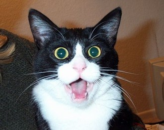 [http://www.blogcdn.com/www.urlesque.com/media/2009/12/2ac29_surprised-cat1.jpg]
