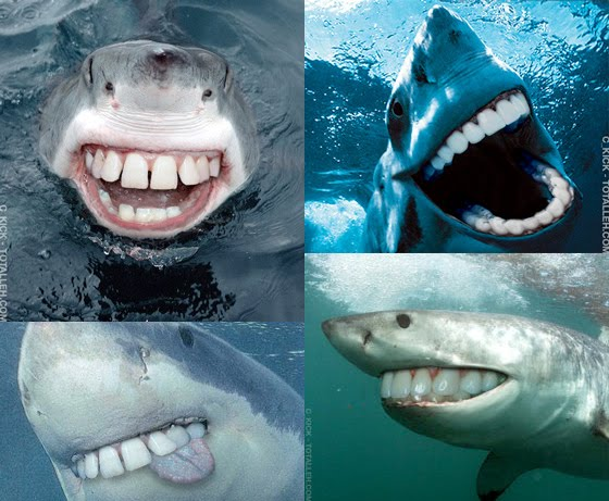 Late Riser -- Sharks With Human Teeth, 1.5 Million Toothpicks = 1 ...