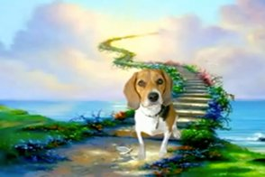 beagle on a fantasy background