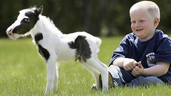 world's smallest horse einstein