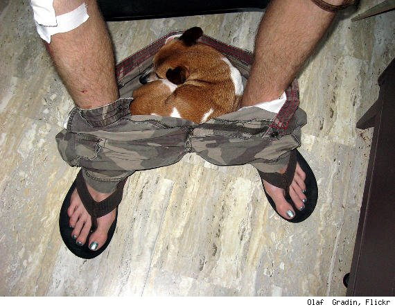 dog sleeping in shorts