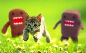 Animated Gif Internet Memes God Kills a Kitten