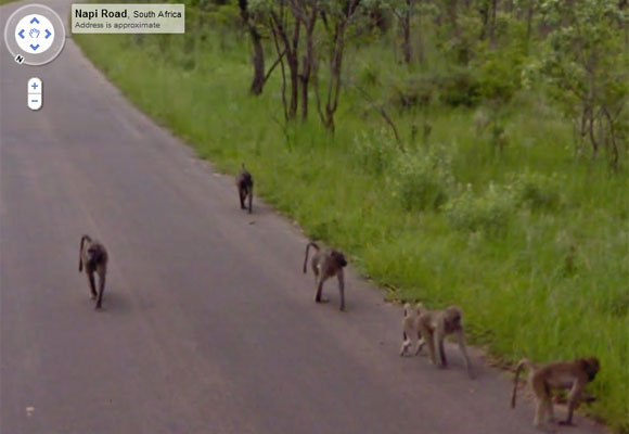 Google Maps Street View Safari Animals Baboons