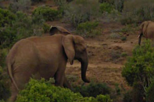 Google Maps Street View Safari Animals Elephant Thumbnail