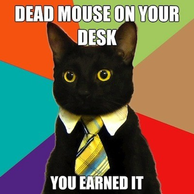 Business Cat: Dead mouse on your desk, you earned it