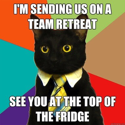 Business Cat: I'm sending us on a team retreat. See you at the top of the fridge.