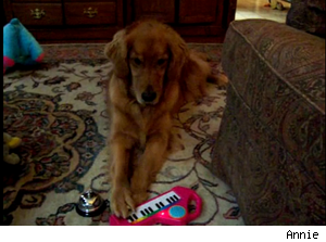 animals playing instruments: dog with keyboard