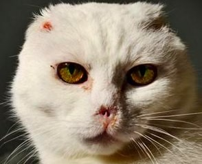 charlie the cat who looks like harry potter villain lord voldemort