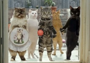 cats with thumbs in cravendale milk commercial