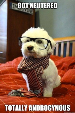 hipster dog got neutered now totally androgynous