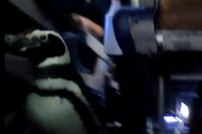 penguins from seaworld on a southwest airlines plane