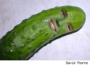 david thorne photoshopped justin bieber's head onto a pickle