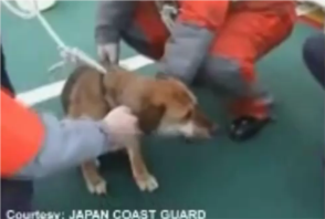 tsunami survivor dog