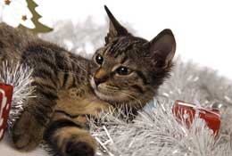 Ideas for practical Christmas gifts for pets